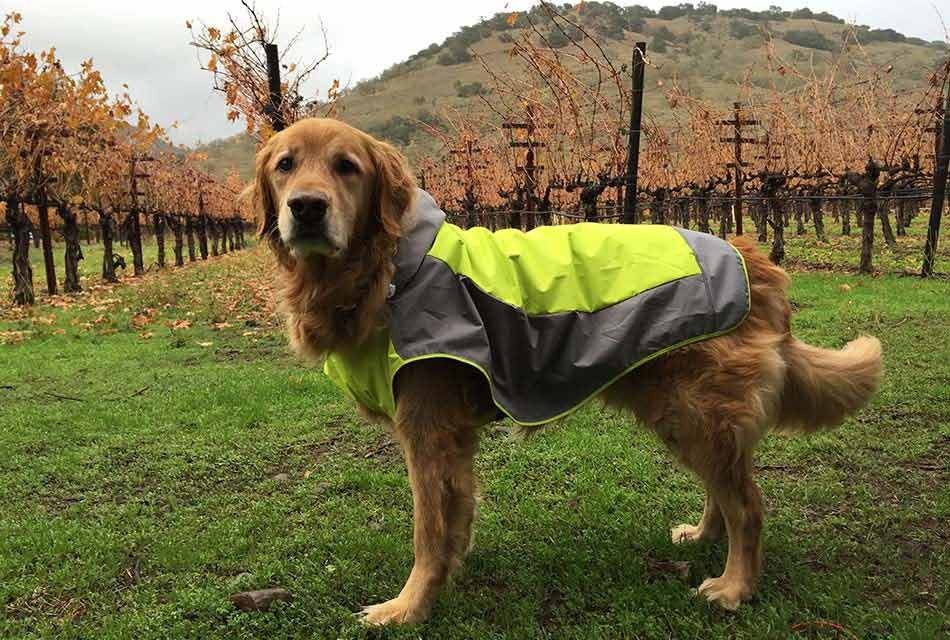 Cooper in raincoat