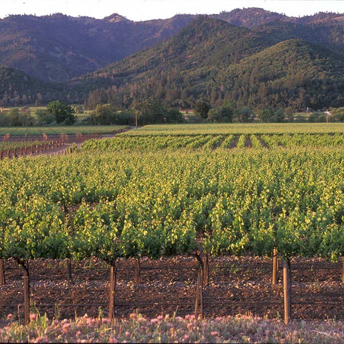 Acquisition of Rector Creek Estate Vineyard